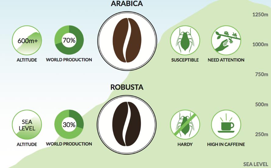 Arabica vs Robusta Beans