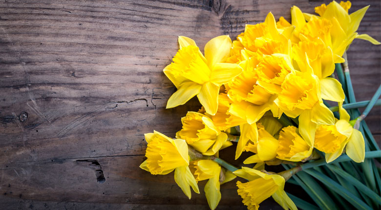 beautiful daffodils flowers