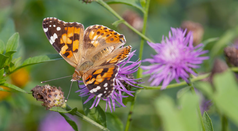 Come close to a butterfly in the Judy Istock Butterfly Haven