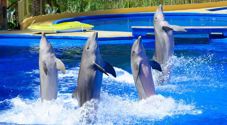 Interact with the dolphins at the Dubai Dolphinarium