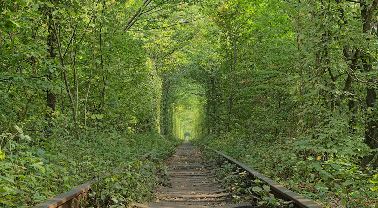 Famous Tree Tunnel of Love